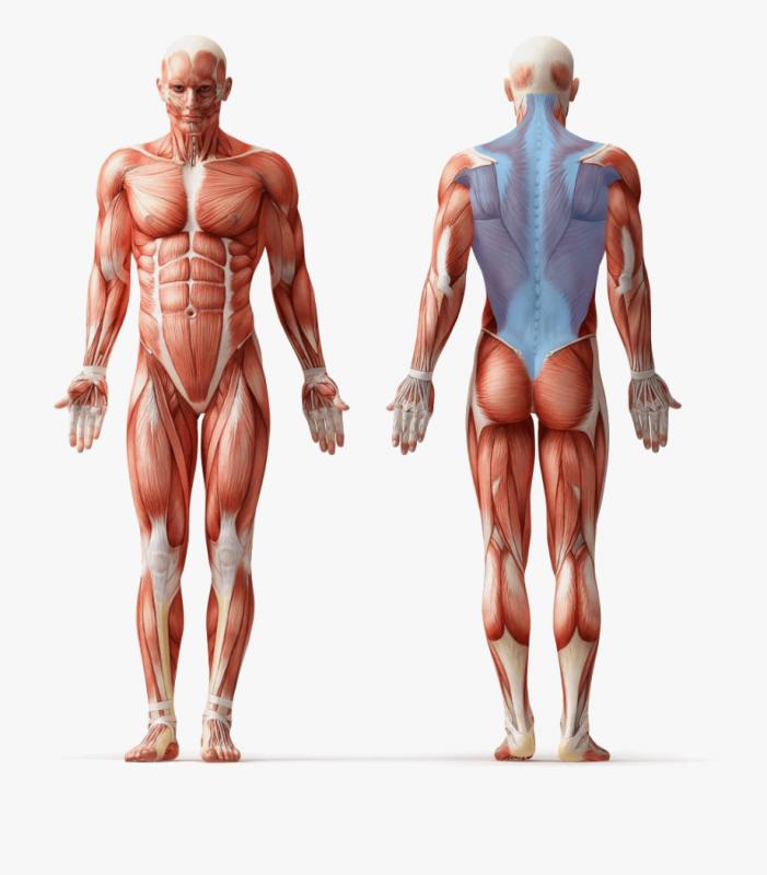 فشار-روی-عضلات-پشت
